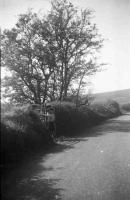 Fairy bush, near Glenhull, Co. Tyrone.